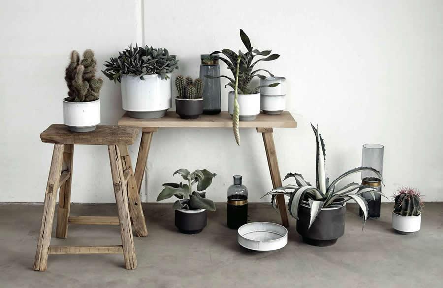 Zo maak je thuis een botanisch interieur | Homezy blog