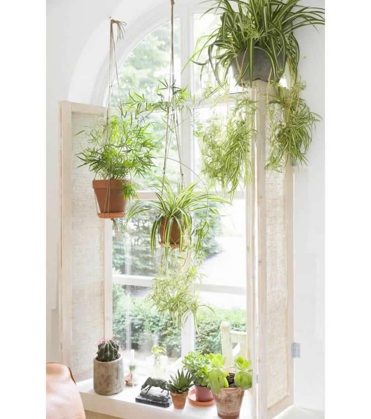 groene planten in hangende potten